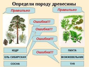 Определи породу древесины КЕДР ЕЛЬ СИБИРСКАЯ СОСНА ПИХТА МОЖЖЕВЕЛЬНИК ТУЯ Оши