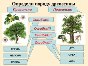 Определи породу древесины ГРУША ЯБЛОНЯ СЛИВА ДУБ ОРЕХ КЛЕН Ошибка!!! Ошибка!!