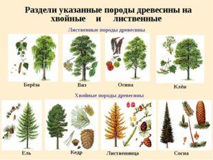 Раздели указанные породы древесины на Лиственные породы древесины Берёза Вяз