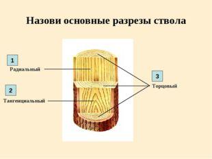 Назови основные разрезы ствола Радиальный Торцовый Тангенциальный 1 2 3