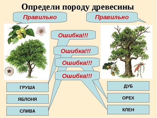 Определи породу древесины ГРУША ЯБЛОНЯ СЛИВА ДУБ ОРЕХ КЛЕН Ошибка!!! Ошибка!!...