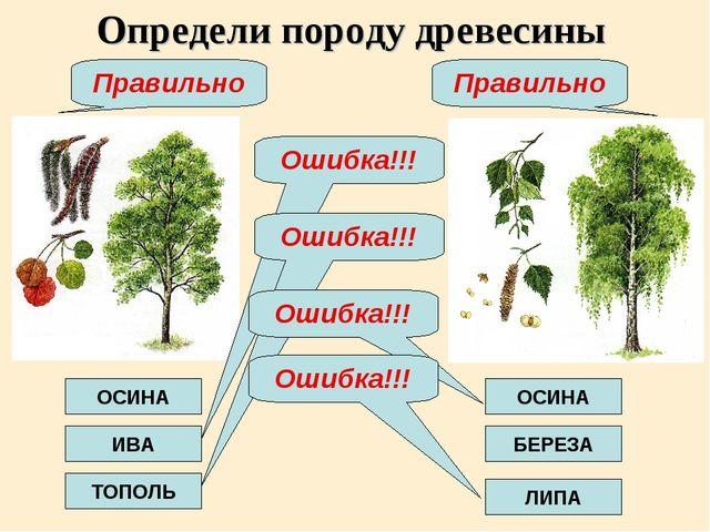 Определи породу древесины ОСИНА ИВА ТОПОЛЬ ОСИНА БЕРЕЗА ЛИПА Ошибка!!! Ошибка...