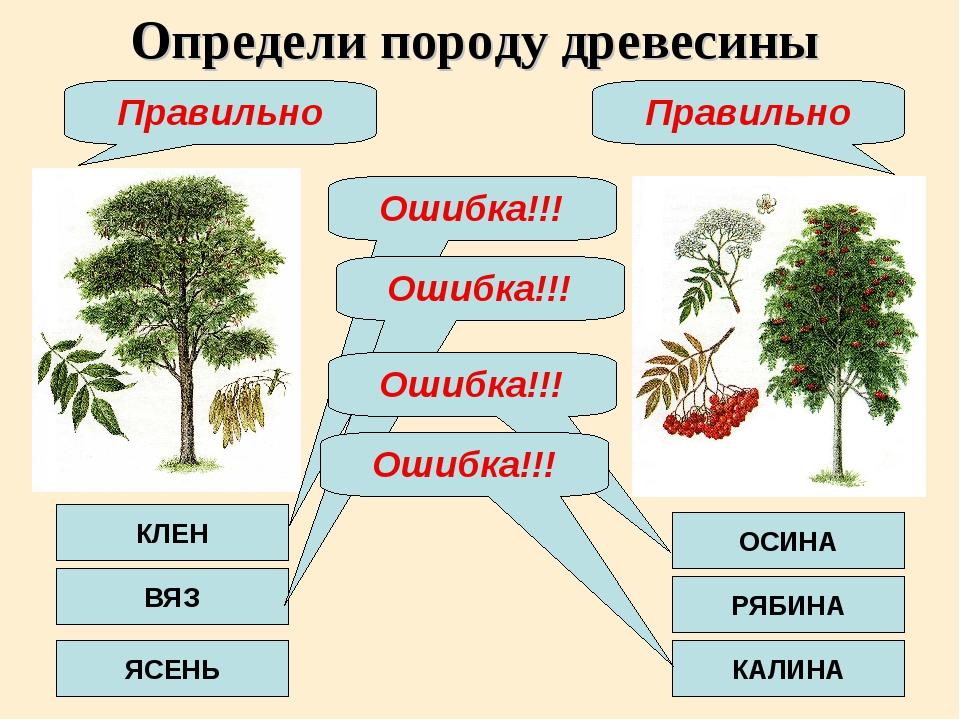 Определи породу древесины КЛЕН ВЯЗ ЯСЕНЬ ОСИНА РЯБИНА КАЛИНА Ошибка!!! Ошибка...
