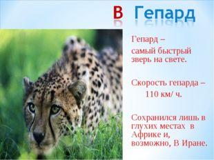 Гепард – самый быстрый зверь на свете. Скорость гепарда – 110 км/ ч. Сохр