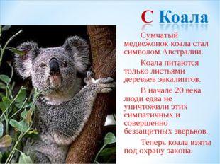 Сумчатый медвежонок коала стал символом Австралии. Коала питаются только