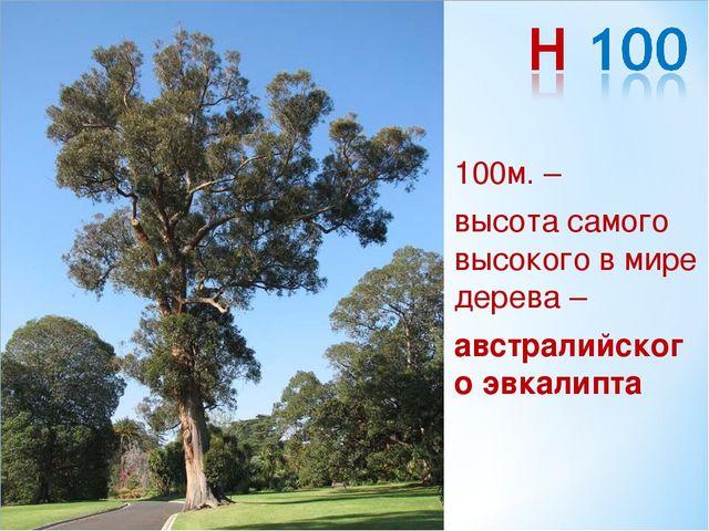 100м. – высота самого высокого в мире дерева – австралийского эвкалипта
