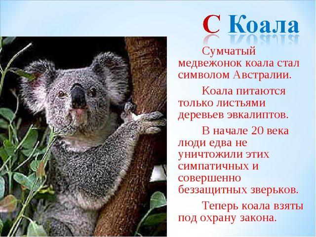 Сумчатый медвежонок коала стал символом Австралии. Коала питаются только...