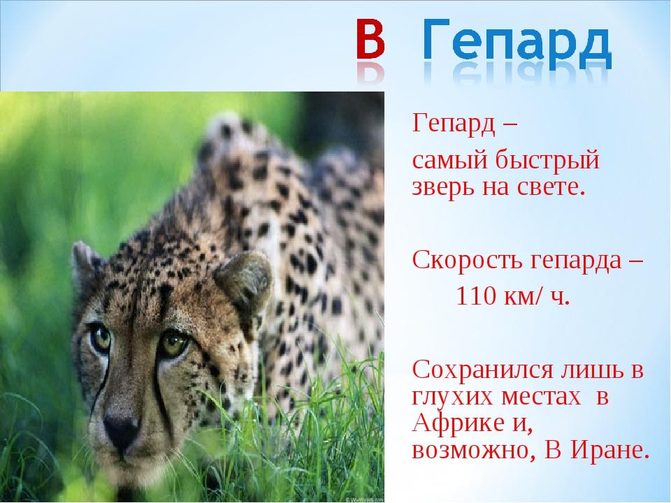 Гепард – самый быстрый зверь на свете. Скорость гепарда – 110 км/ ч. Сохр...