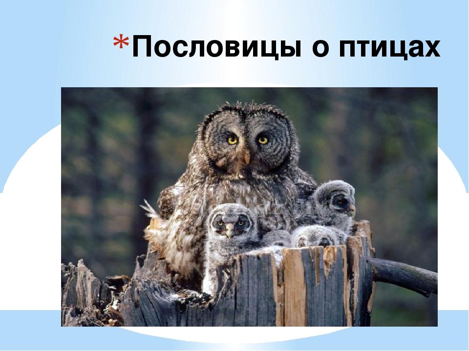 Пословицы о птицах
