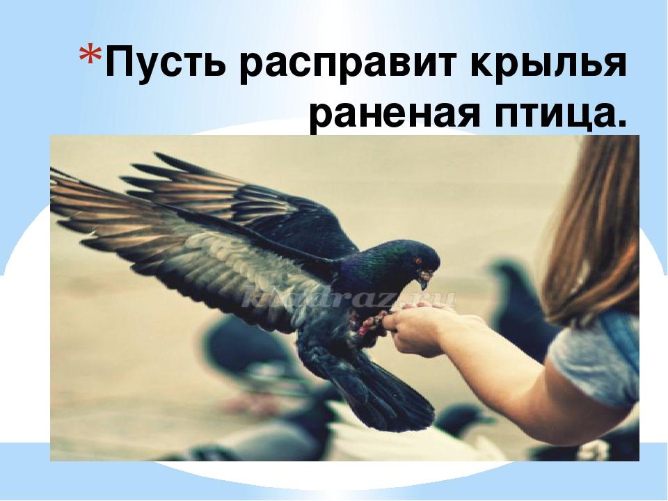 Пусть расправит крылья раненая птица.