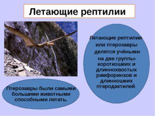Летающие рептилии Летающие рептилии или птерозавры делятся учёными на две гр