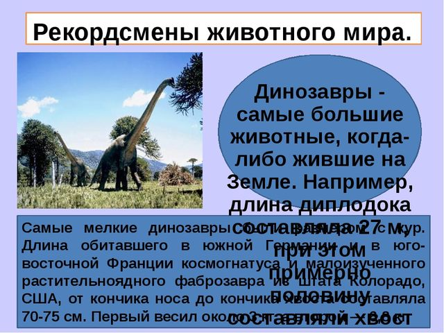 Рекордсмены животного мира. Динозавры - самые большие животные, когда-либо ж...