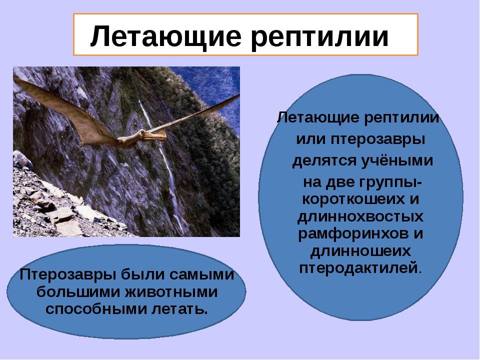 Летающие рептилии Летающие рептилии или птерозавры делятся учёными на две гр...