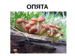 ОПЯТА