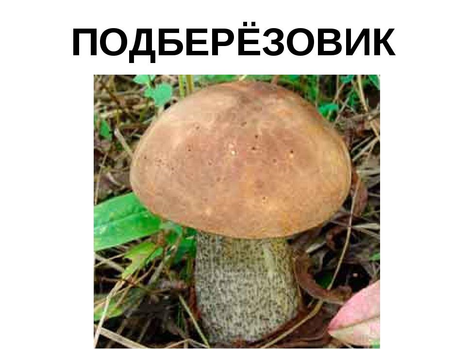 ПОДБЕРЁЗОВИК