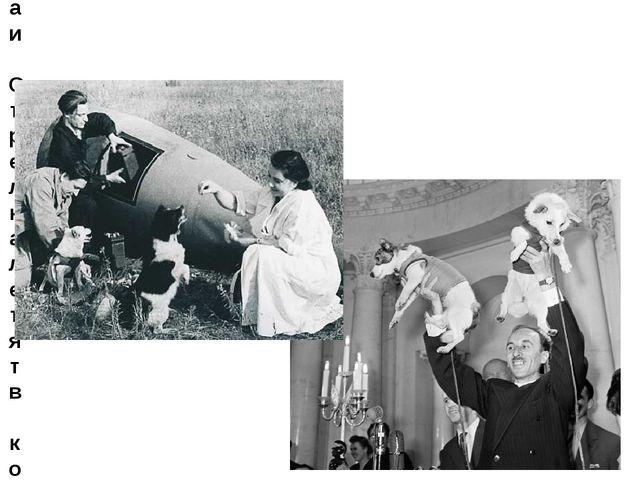 19 августа 1960 года: Белка и Стрелка летят в космос.