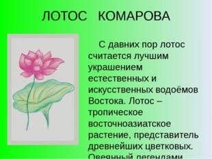 ЛОТОС КОМАРОВА С давних пор лотос считается лучшим украшением естественных и