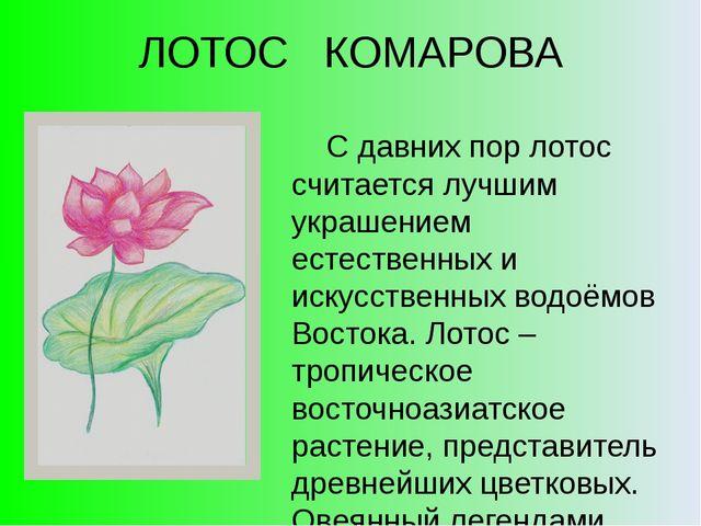 ЛОТОС КОМАРОВА С давних пор лотос считается лучшим украшением естественных и...