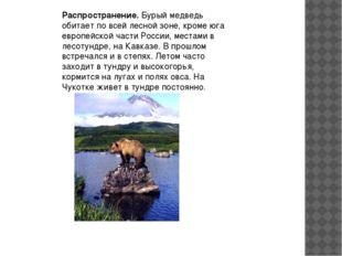 Распространение.Бурый медведь обитает по всей лесной зоне, кроме юга европей