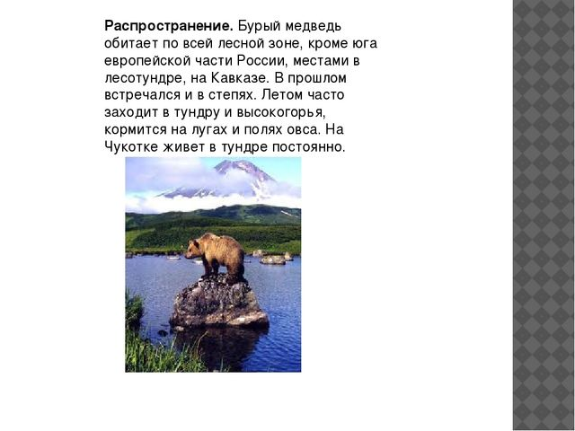 Распространение.Бурый медведь обитает по всей лесной зоне, кроме юга европей...