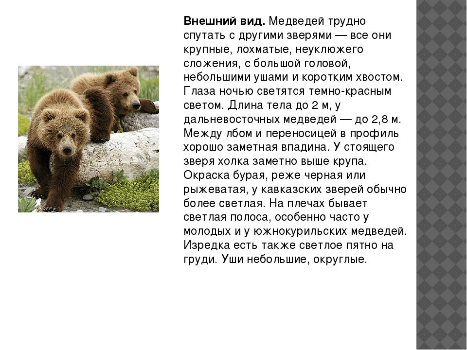 Внешний вид.Медведей трудно спутать с другими зверями — все они крупные, лох...