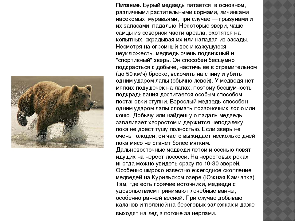 Питание.Бурый медведь питается, в основном, различными растительными кормами...