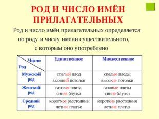 РОД И ЧИСЛО ИМЁН ПРИЛАГАТЕЛЬНЫХ Род и число имён прилагательных определяется