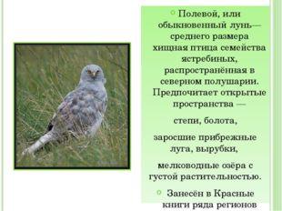 Полевой, или обыкновенный лунь— среднего размера хищная птица семейства ястр