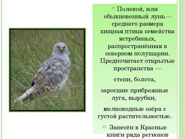 Полевой, или обыкновенный лунь— среднего размера хищная птица семейства ястр...