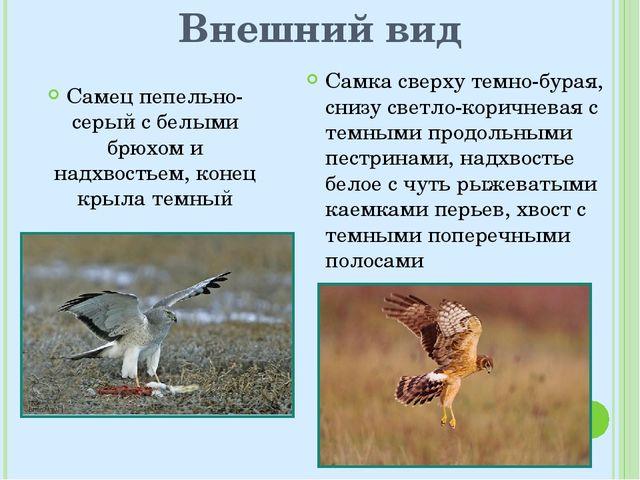 Внешний вид Самец пепельно-серый с белыми брюхом и надхвостьем, конец крыла т...