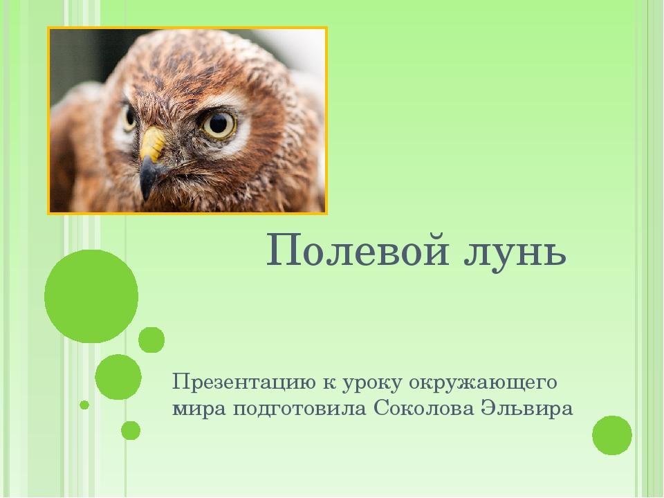 Полевой лунь Презентацию к уроку окружающего мира подготовила Соколова Эльвира