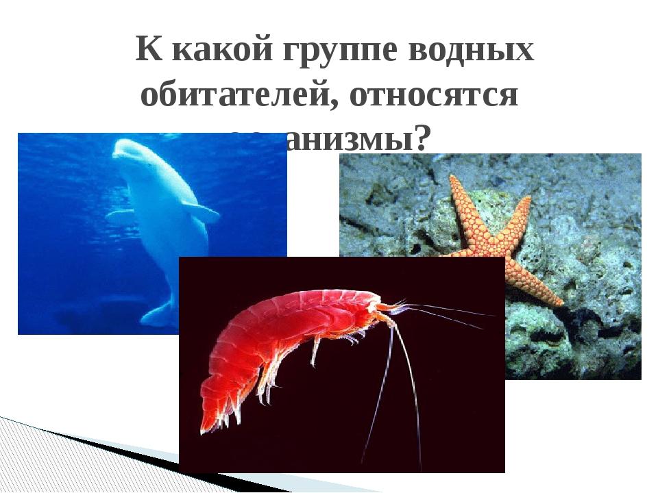 К какой группе водных обитателей, относятся организмы?