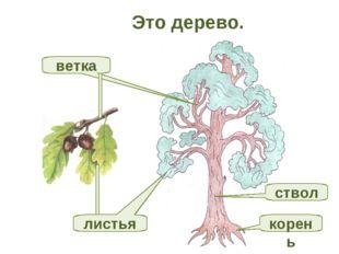 Это дерево. корень ветка ствол листья