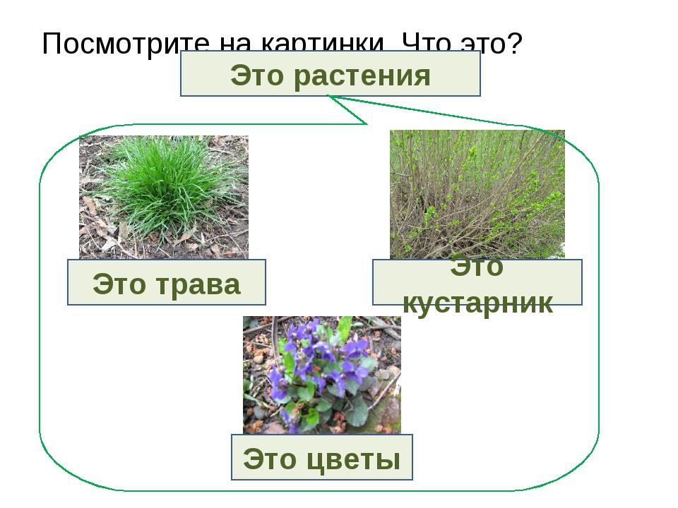 Посмотрите на картинки. Что это? Это растения Это трава Это кустарник Это цветы