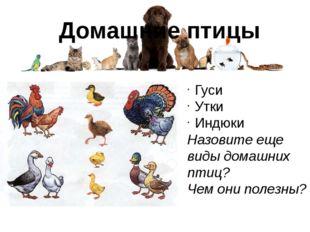 Домашние птицы Гуси Утки Индюки Назовите еще виды домашних птиц? Чем они поле