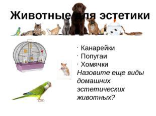 Животные для эстетики Канарейки Попугаи Хомячки Назовите еще виды домашних эс