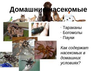 Домашние насекомые Тараканы Богомолы Пауки Как содержат насекомых в домашних
