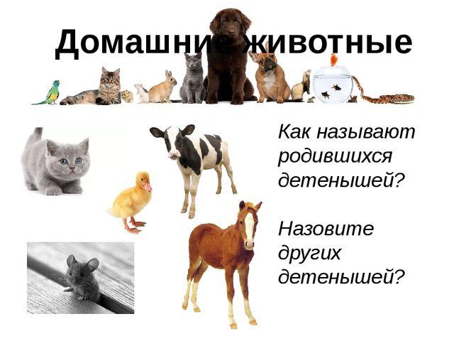 Домашние животные Как называют родившихся детенышей? Назовите других детенышей?
