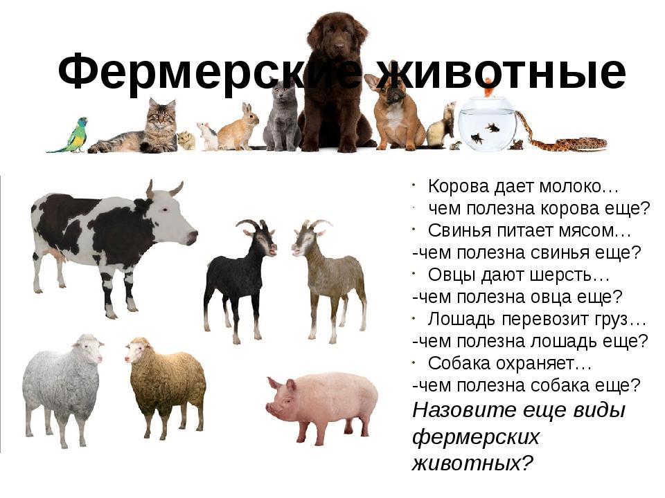 Фермерские животные Корова дает молоко… чем полезна корова еще? Свинья питает...