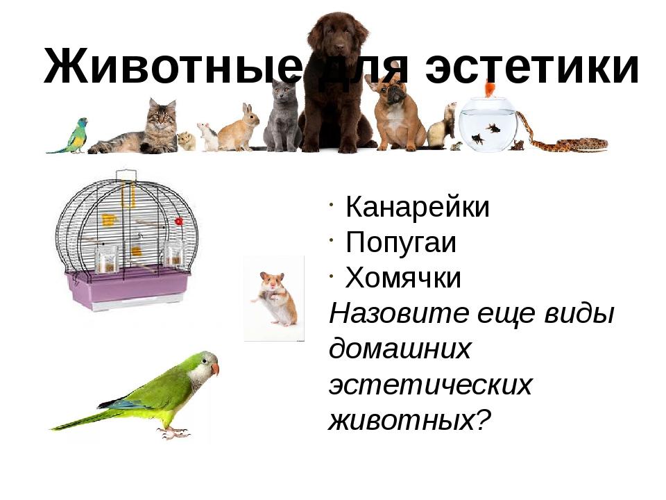 Животные для эстетики Канарейки Попугаи Хомячки Назовите еще виды домашних эс...