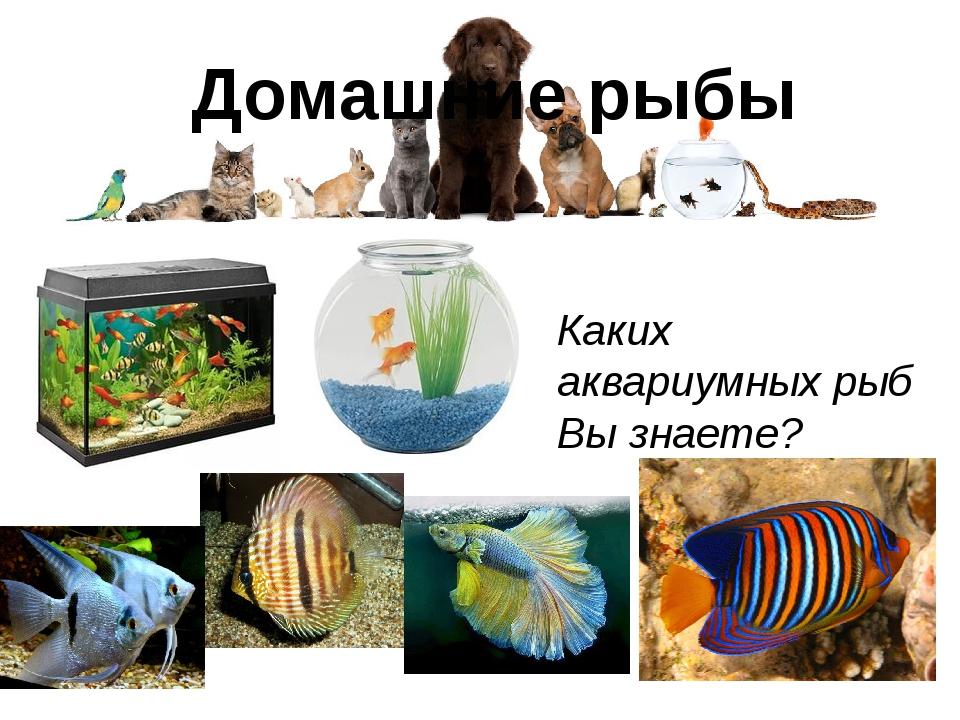 Домашние рыбы Каких аквариумных рыб Вы знаете?