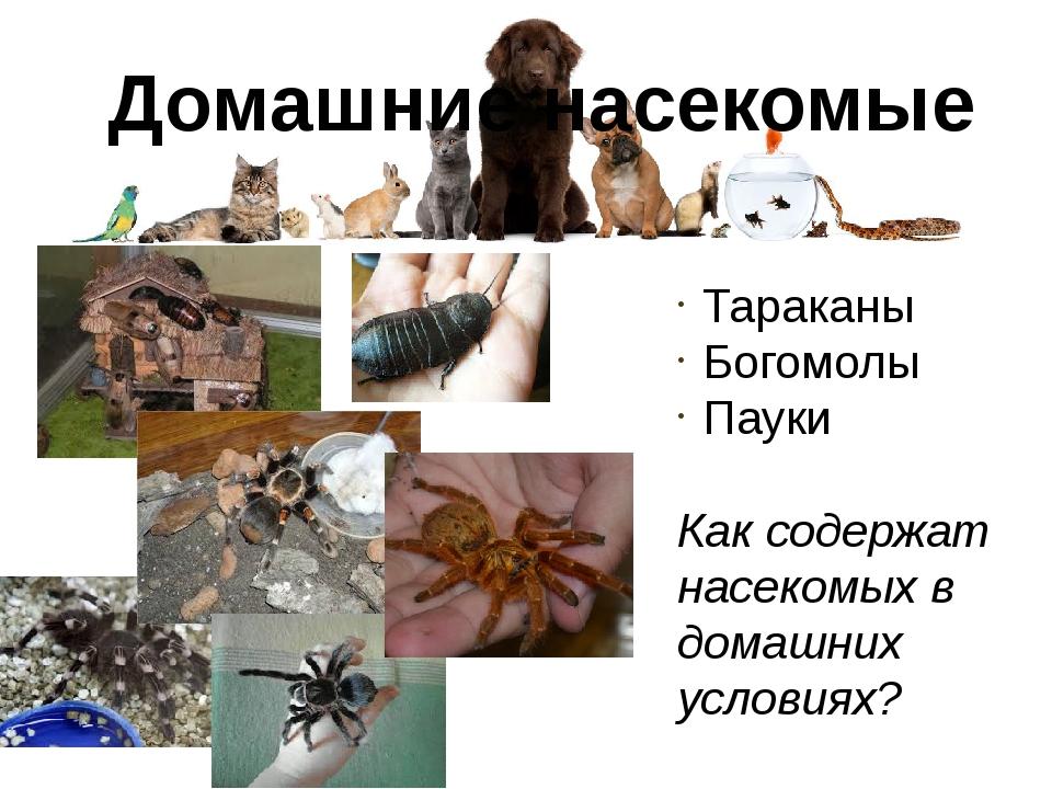 Домашние насекомые Тараканы Богомолы Пауки Как содержат насекомых в домашних...