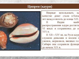 Ципреи (каури) Впервые использовать каури в качестве денег стали вКитае 350