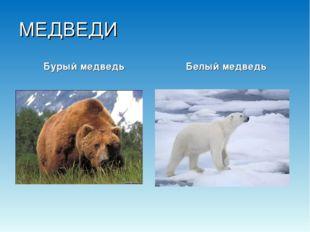 МЕДВЕДИ Бурый медведь Белый медведь