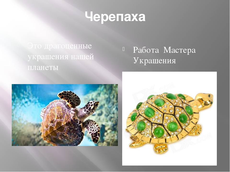 Черепаха Это драгоценные украшения нашей планеты Работа Мастера Украшения