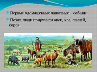 Первые одомашенные животные – собаки. Позже люди приручили овец, коз, свиней,
