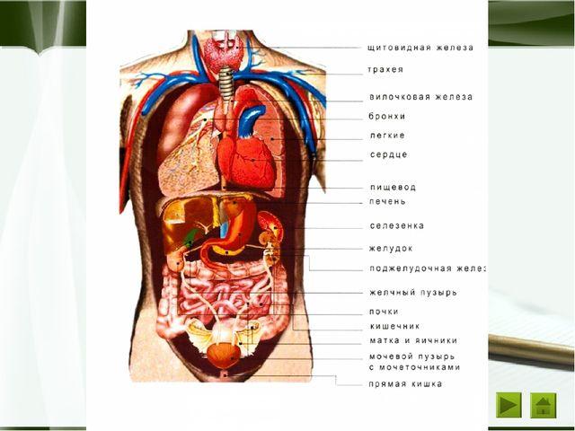 Задание 1 Вариант 1 Орган Греческое обозначение Болезнь Боль Воспаление Печен...