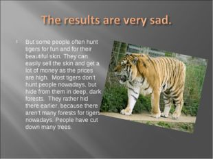 But some people often hunt tigers for fun and for their beautiful skin. They