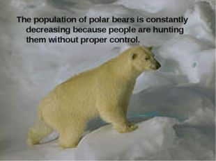 The population of polar bears is constantly decreasing because people are hun