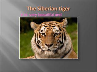 It is very beautiful and dangerous вфтdangerous animal.